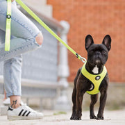REVERSIBLE NEON DOG HARNESS - Dukier Store
