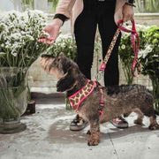 SAVANA REVERSIBLE DOG HARNESS - Dukier Store