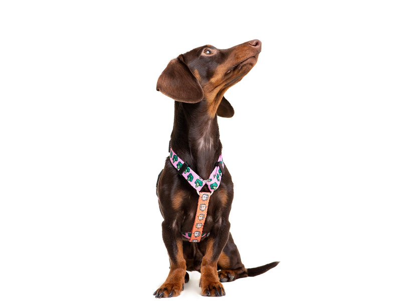 VEGAN CLASSIC DOG HARNESS - Dukier International Store