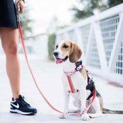 WATERMELON LEASH FOR DOGS - Dukier Store
