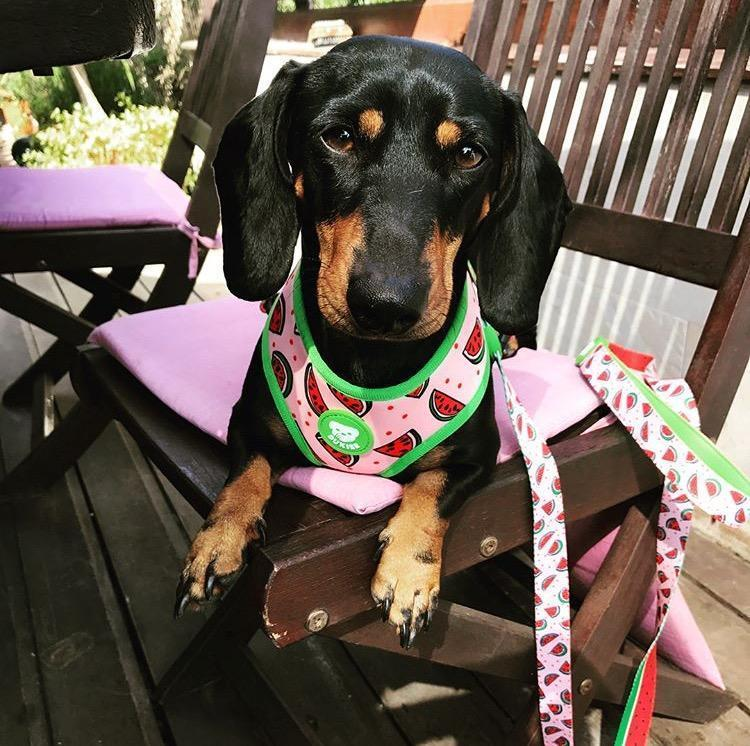 WATERMELON REVERSIBLE DOG HARNESS - Dukier Store
