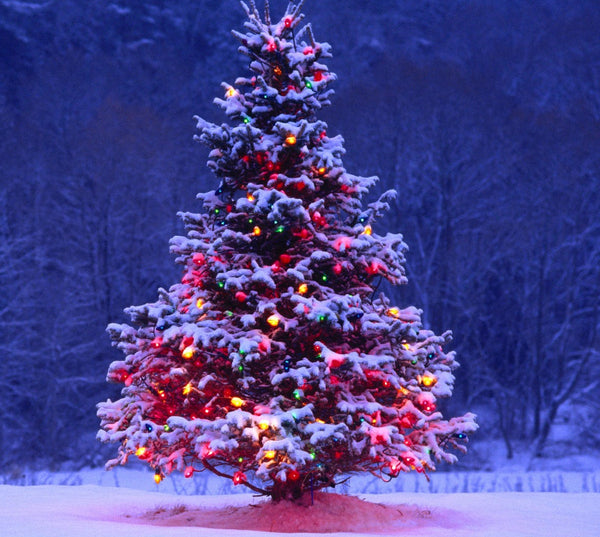 Outdoor Christmas tree with decorations