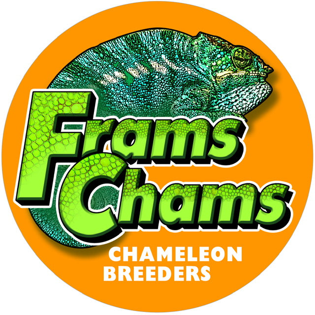 Chameleon Shopping Checklist