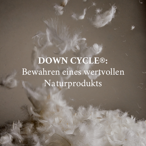 DOWN CYCLE