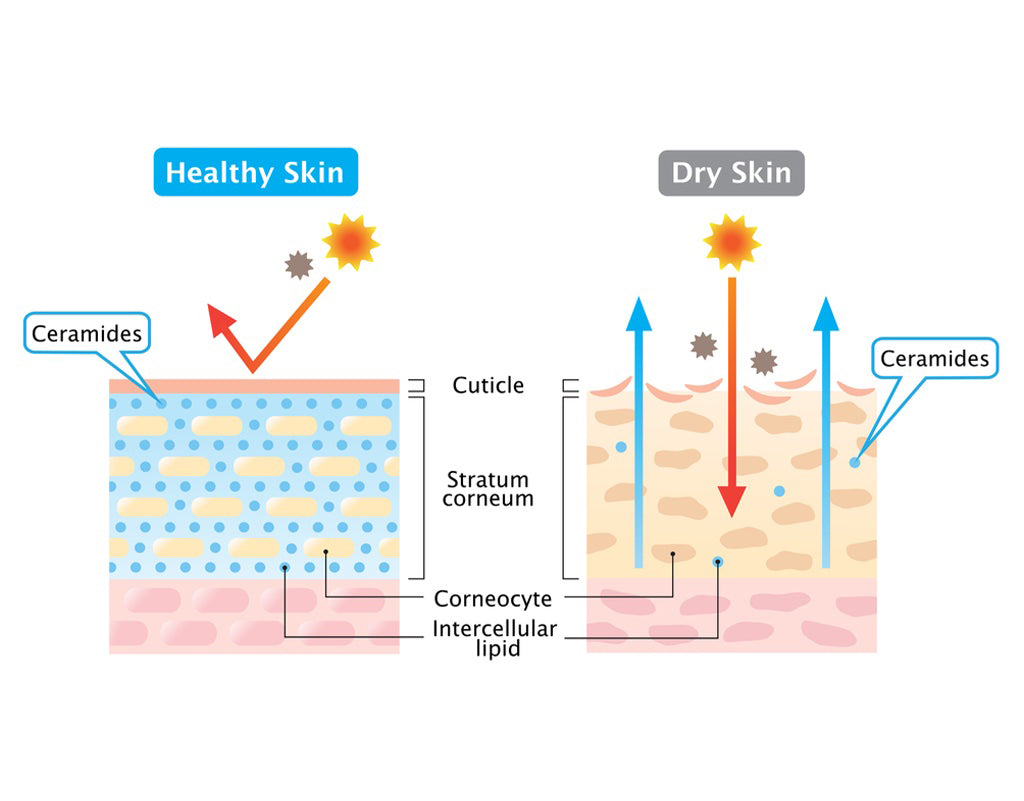 Pictogram of the benefits of ceramides for skin