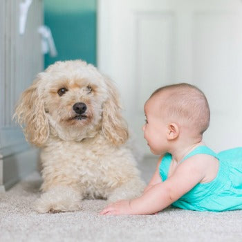 Baby and pet