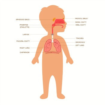 baby cough anatomy (respiratory system)
