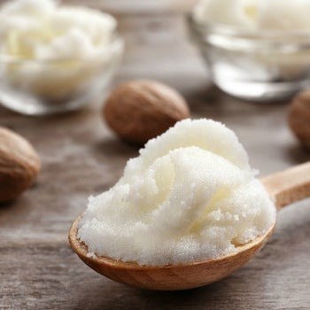 shea butter in wooden spoon with shea nuts in background