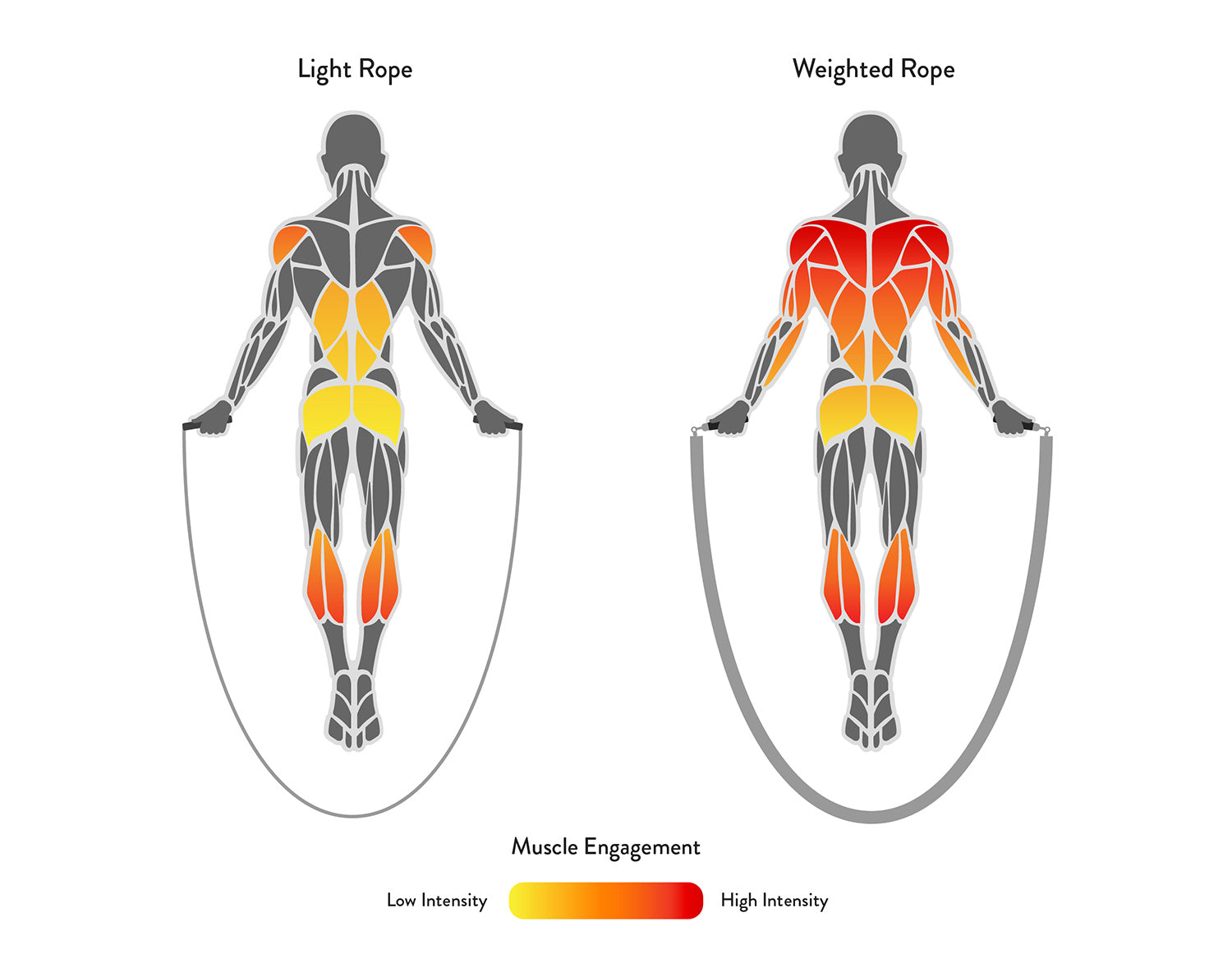 Muscle engagement comparison between light and weighted jump ropes