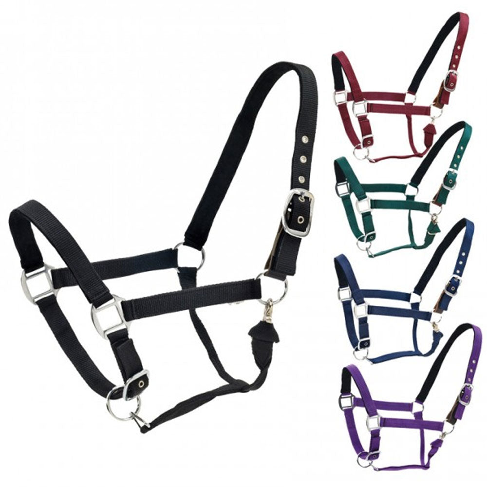468769 Centaur Solid Cushion Padded Breakaway Halter
