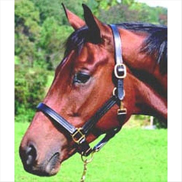 24600 Thornhill Pro USA Leather Halter 1 Inch Triple Stitched