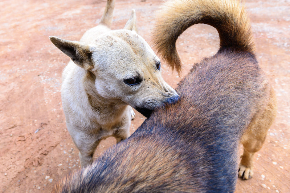 10 wild and crazy facts about fleas and dogs - Dr. Dobias Natural Healing