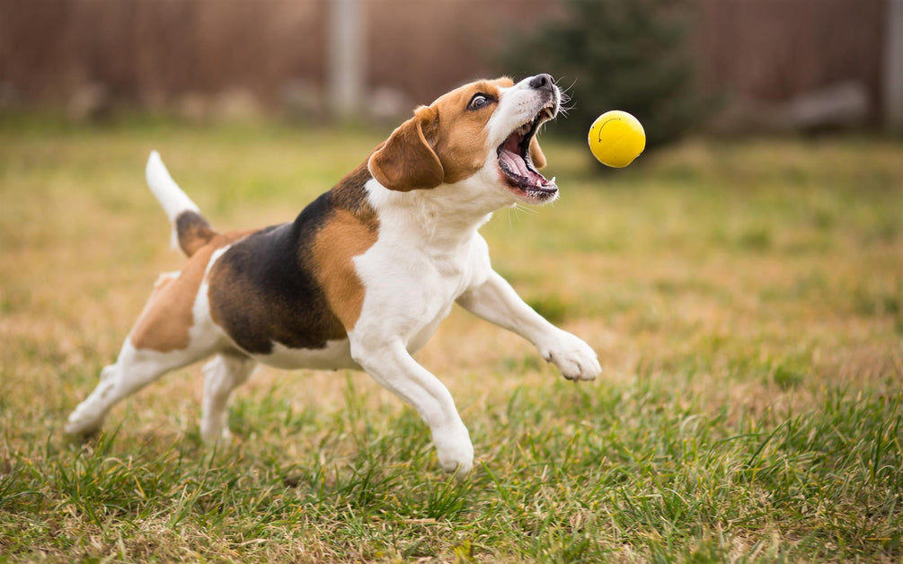 images of dogs playing fetch