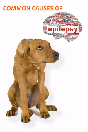 Mercury causes epilepsy in dogs (Part 3)