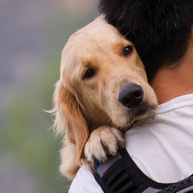 Diabetes in Dogs - Treatment and Prevention - Holistic Approach