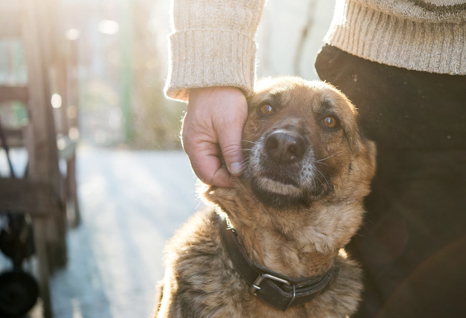 What Could be Causing Your Dog's Cough I Dr  Peter Dobias