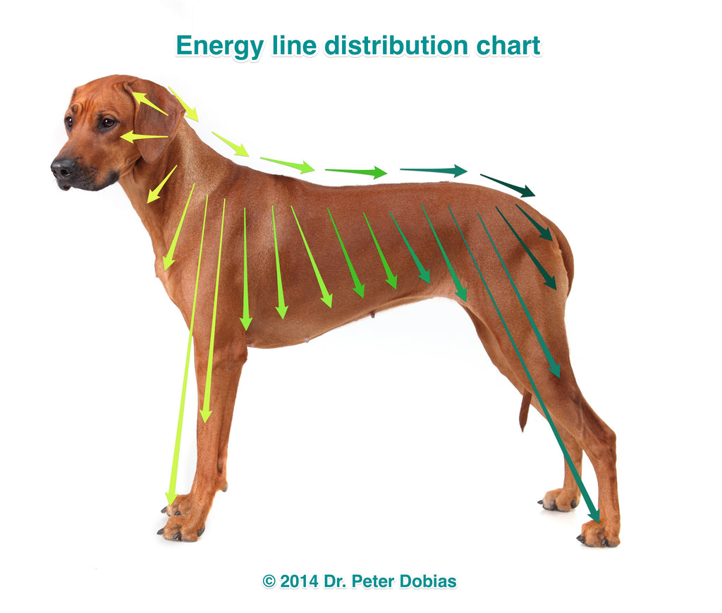 Treating Muscle and Spine Pain in Dogs Naturally I Dr. Peter Dobias