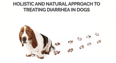 Holistic and natural approach to diarrhea in dogs