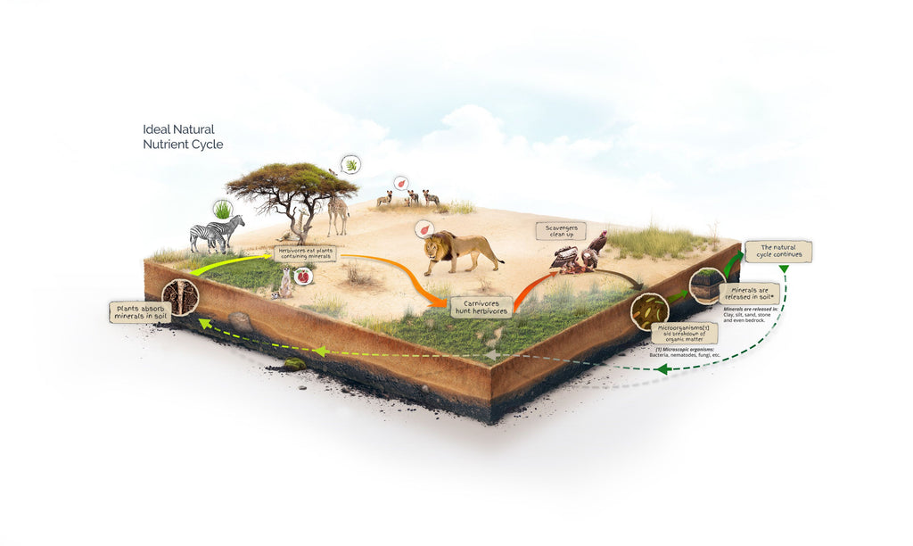 infographic depicting a perfect nutrient cycle