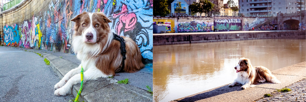 Pax at the Donau in Vienna