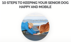 Blog - 10 Steps to keeping your senior dog happy and mobile