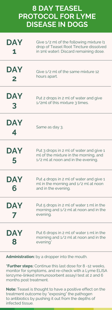 8 day teasel protocol for lyme disease in dogs