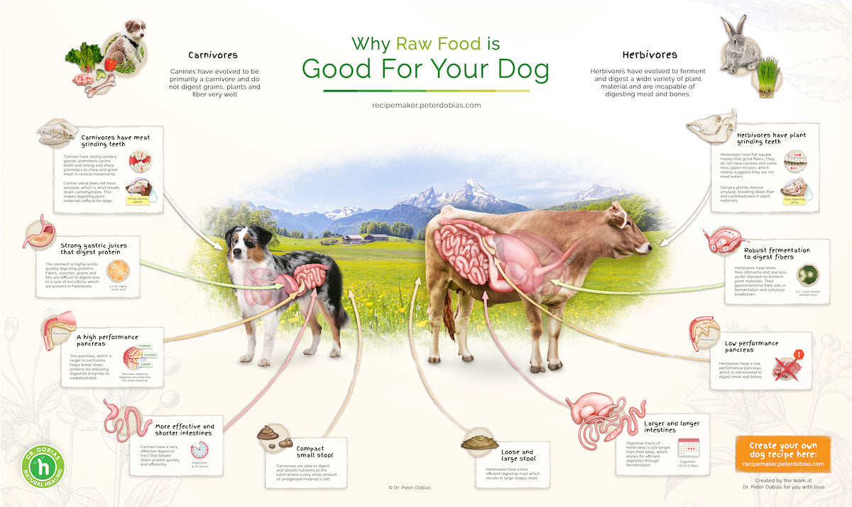 Why natural cooked or raw food is best for dogs - digestive tract of carnivores vs herbivores