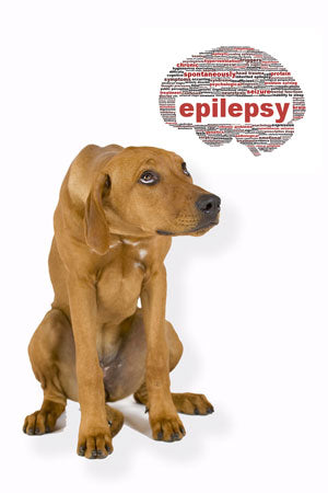 Epilepsy In Dogs Holistic Treatment And Prevention Part 1