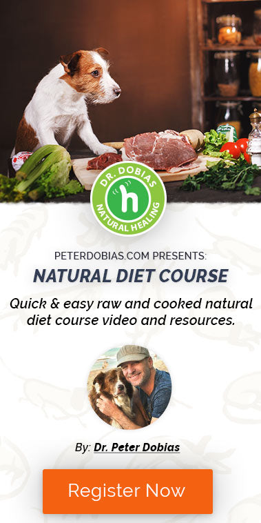 Raw Diet Course
