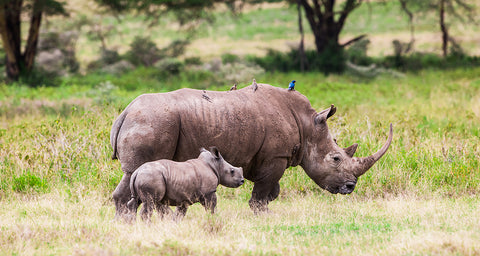 Help the Rhinos - Donate to help conservation efforts