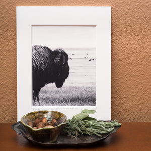 Grazers of the Great Plains:  Portrait