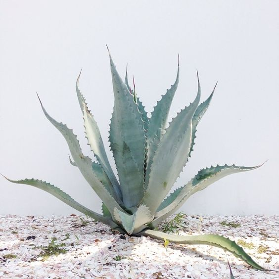 The amazing benefits of using aloe vera on your skin
