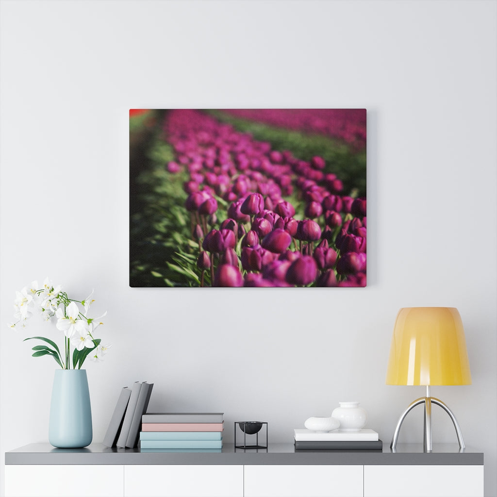Purple Skagit Tulips Print on Canvas - www.thedesigntank.com