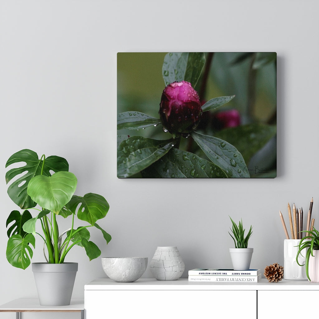 Peony Reflections Print on Canvas - www.thedesigntank.com