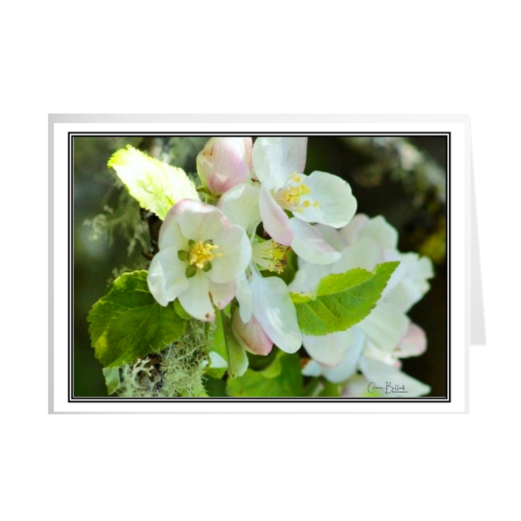 Pacific Crabapple Note Cards - www.thedesigntank.com