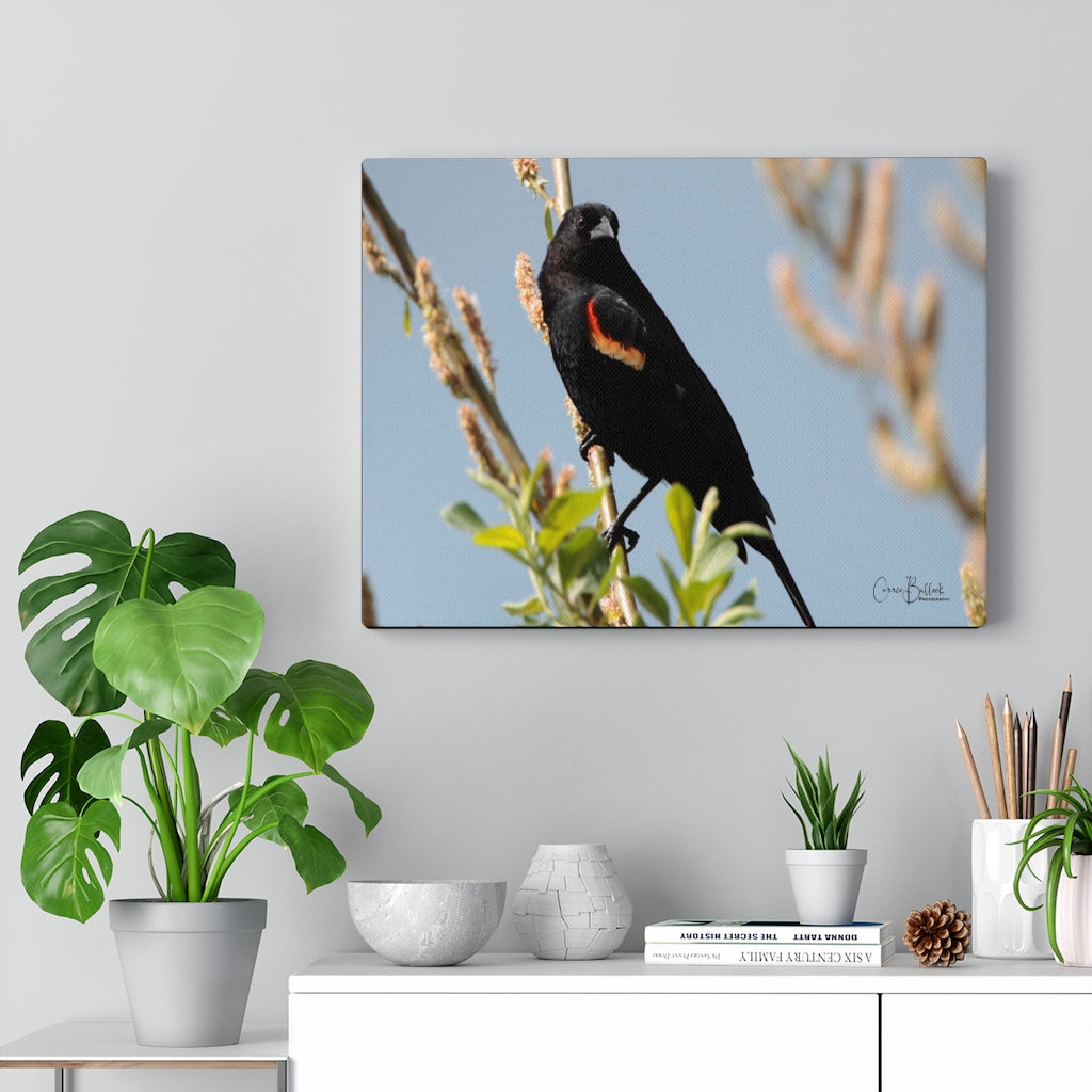 Red-winged Blackbird Lakeside Print on Canvas - www.thedesigntank.com