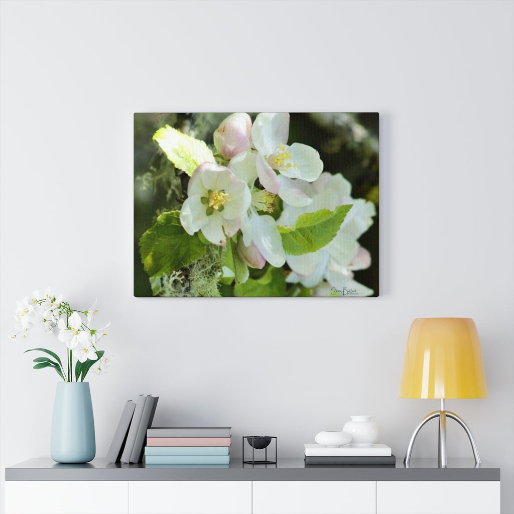 Pacific Crabapple Print on Canvas - www.thedesigntank.com