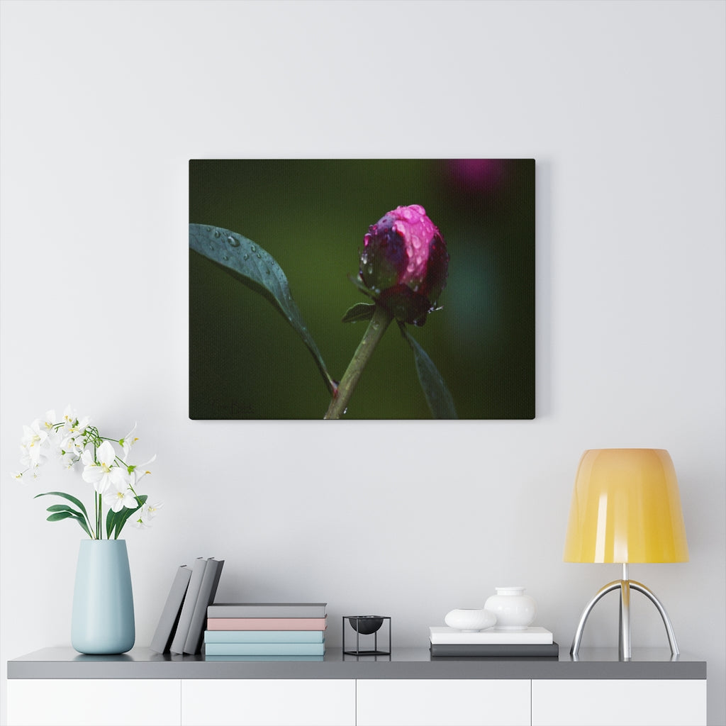 Peony Bud in the Rain Print on Canvas - www.thedesigntank.com
