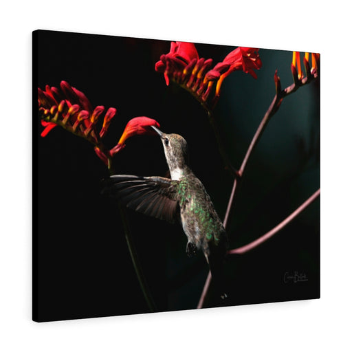 Hummingbird Print on Canvas - www.thedesigntank.com