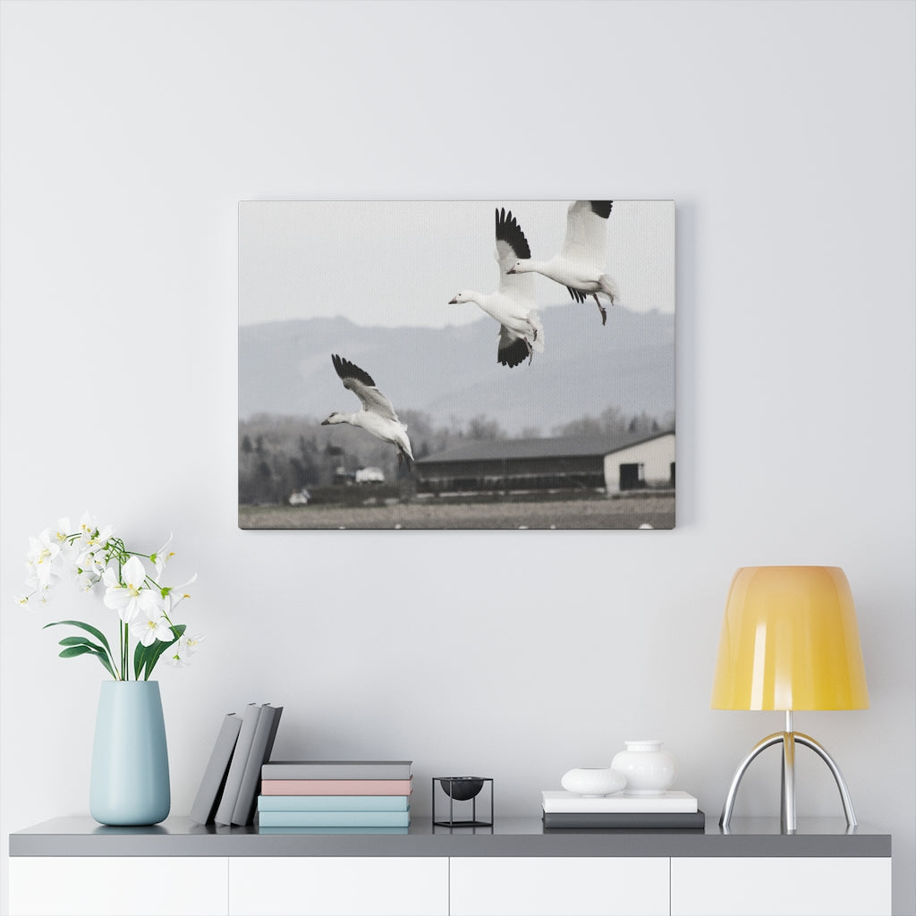 Snow Geese Print on Canvas - www.thedesigntank.com