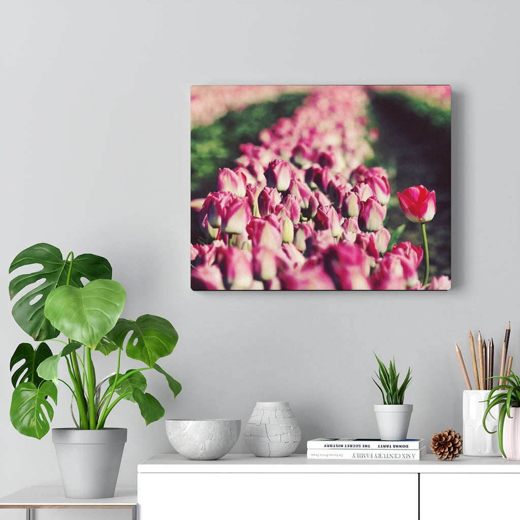 Pretty Pink Tulips Print on Canvas - www.thedesigntank.com