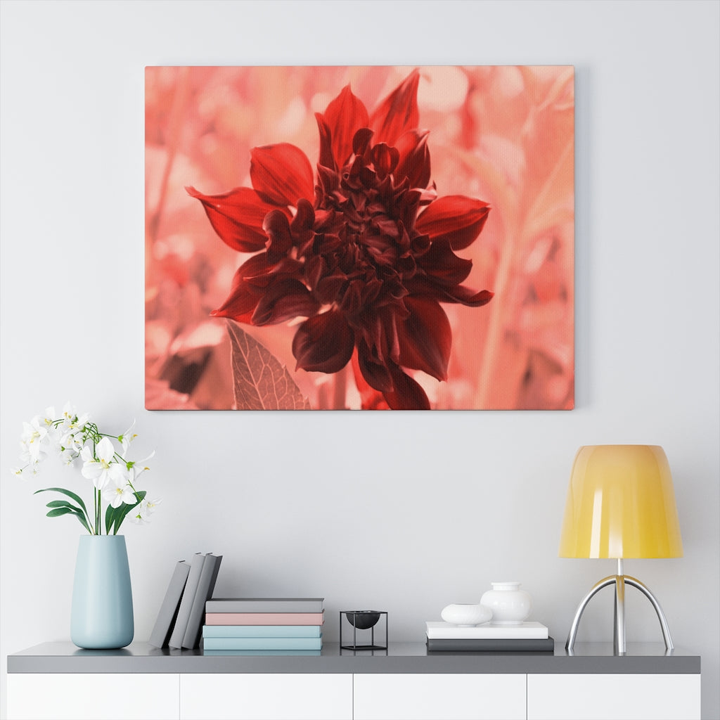 Carmine Blush Dahlia Print on Canvas - www.thedesigntank.com