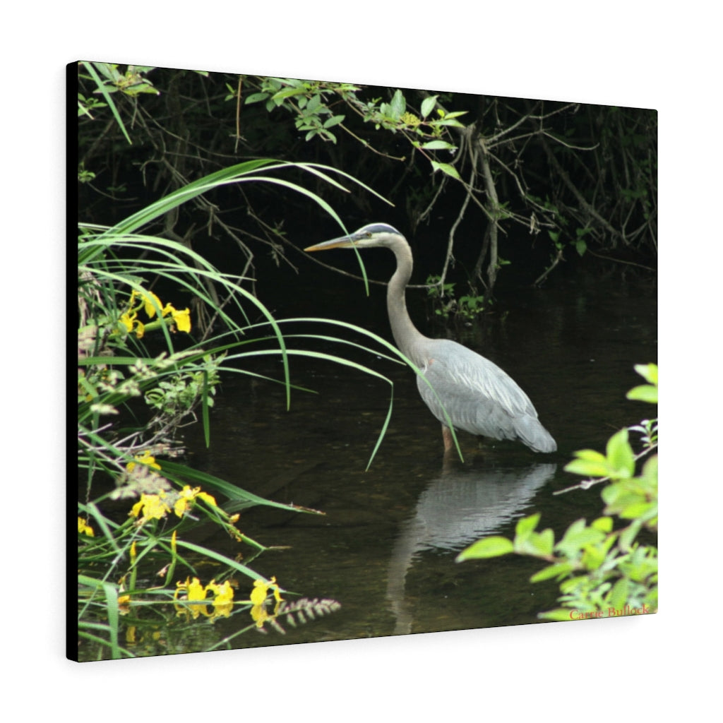 Great Blue Heron on Whatcom Creek Print on Canvas - www.thedesigntank.com