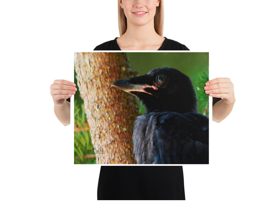 Baby American Crow Print on Art Paper - www.thedesigntank.com