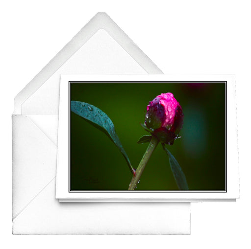 Peony Bud in the Rain Notecards - www.thedesigntank.com