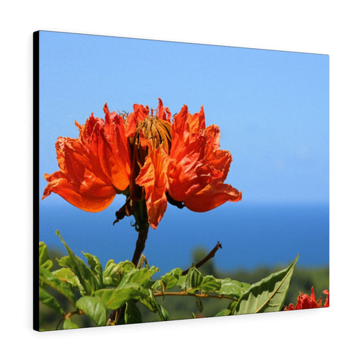 African Tulip Tree Print on Canvas by Carrie Bullock - www.thedesigntank.com