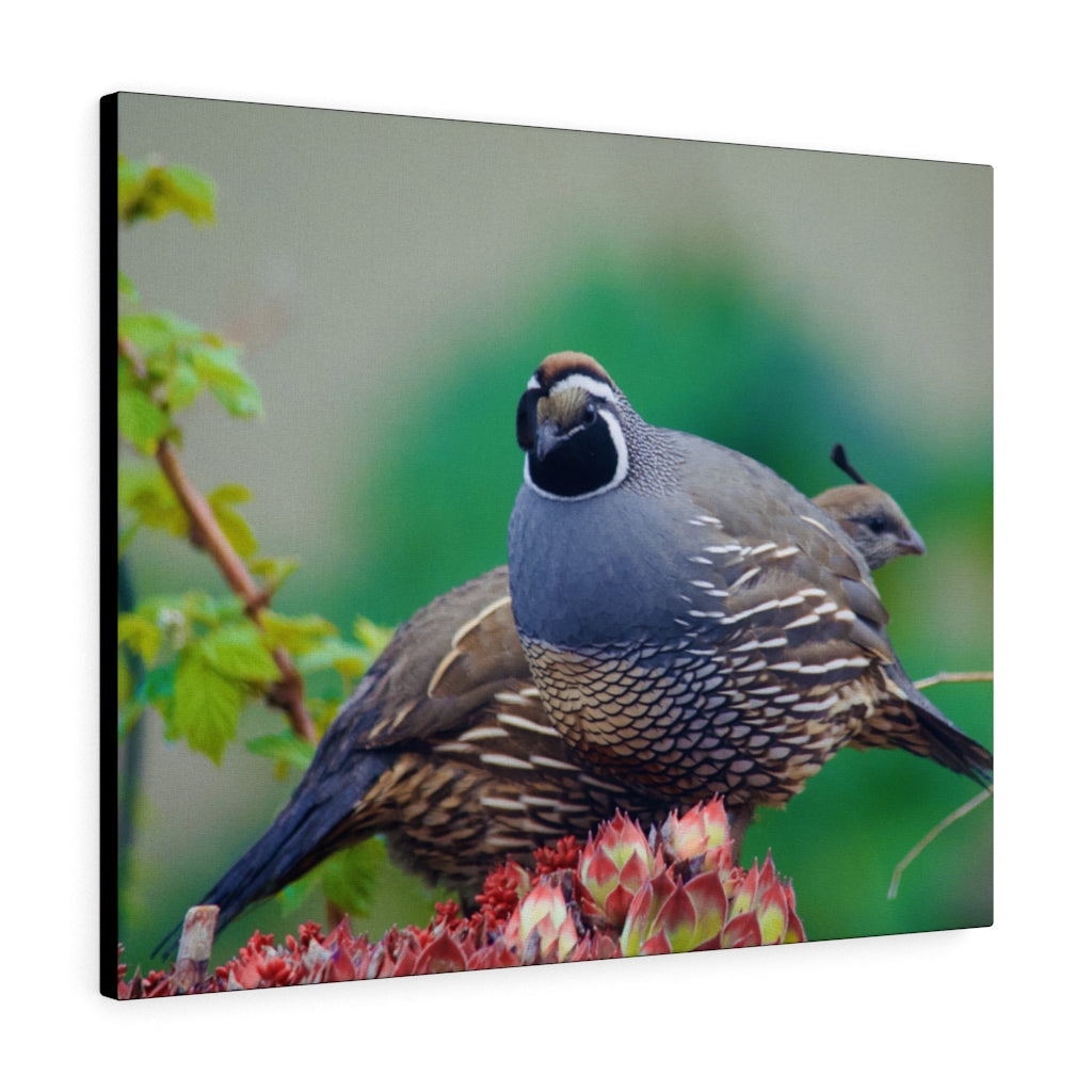 Quail Print on Canvas - www.thedesigntank.com