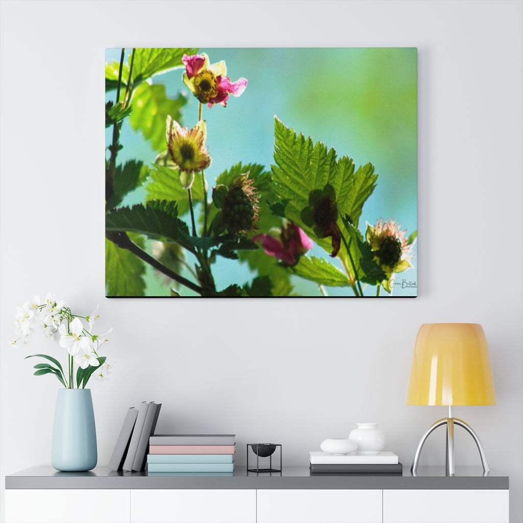 Salmonberry Blossom Print on Canvas - www.thedesigntank.com