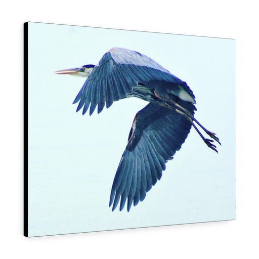 Blue Heron in Flight Print on Canvas - Design Tank