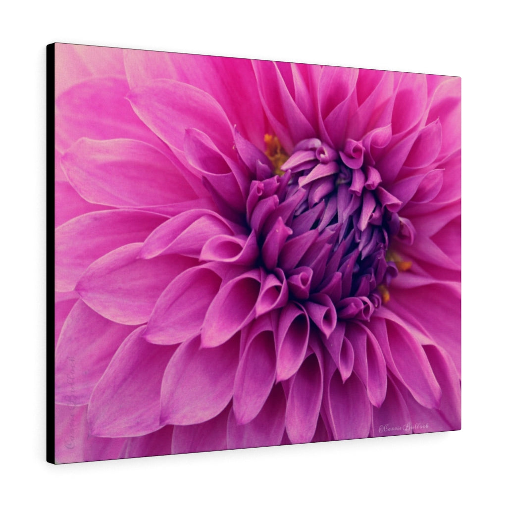 Pink Dahlia Print on Canvas - www.thedesigntank.com